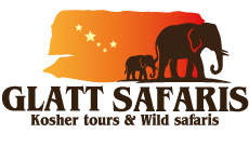 Glatt Safaris