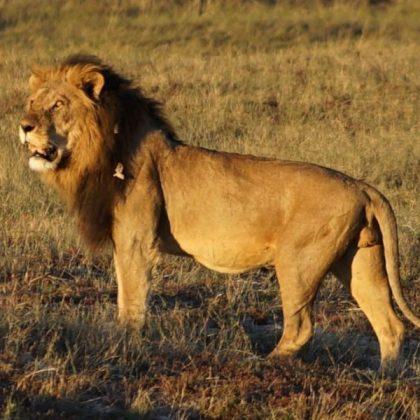 Kosher Safaris